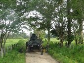 NUEVA MASACRE DE LAS FARC EN ARAUCA CONTRA EL EJÉRCITO NACIONAL