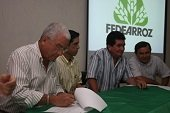 Demorado proyecto de investigación arrocera en Aguazul, por culpa de Colciencias