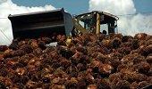Arranca asistencia técnica gremial palmera a productores casanareños