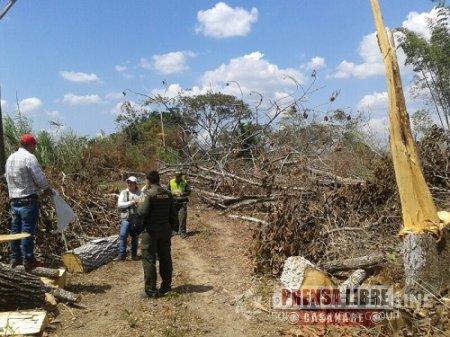 Denuncia tala indiscriminada de árboles en Monterrey