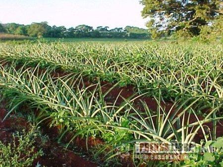 Secretaría de Agricultura de Casanare promueve Alianzas Productivas