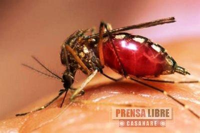 Aumentan casos de dengue en Yopal