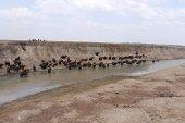 Planeación Departamental solicitó al Gobierno Nacional agilizar ejecución de compensaciones ambientales