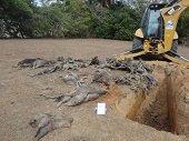 Avanza operativo para mitigar problemática ambiental en Paz de Ariporo