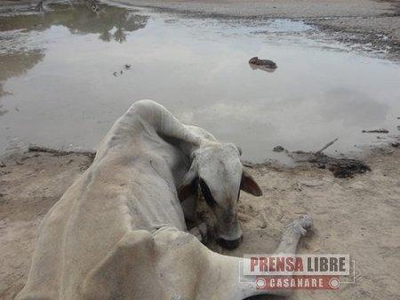 Siguen muriendo animales de especies silvestres en Paz de Ariporo