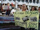 Plantones ambientales en Paz de Ariporo y Bogotá