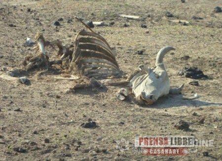 Sequía origina emergencias también en Nunchía y Hato Corozal