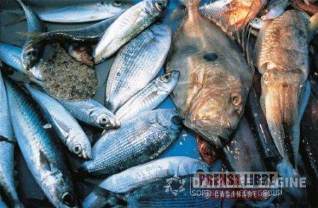 Autoridades hicieron recomendaciones sobre consumo de productos derivados de la pesca en Semana Santa